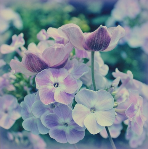 lovely-flowers-with-polaroid-fade_small